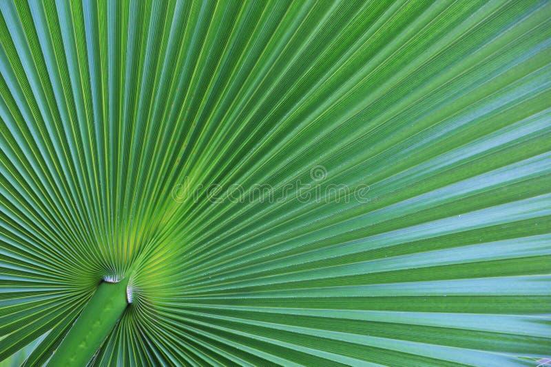 Palmblattnahaufnahme als Hintergrund stockfoto