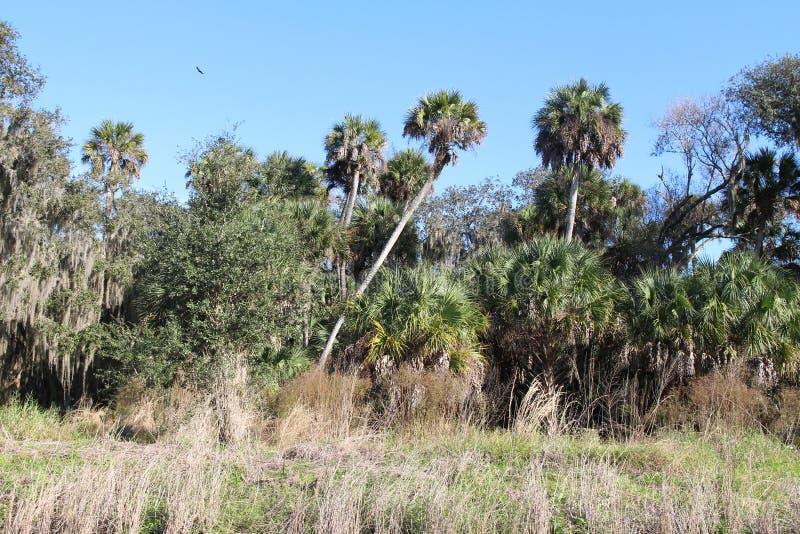 Palmbomen en andere vegetatie royalty-vrije stock foto's