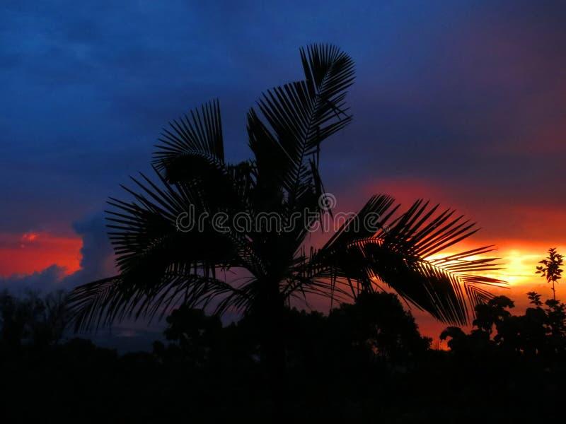 Palmboom bij zonsondergang, Palmtree at sunset; Santa Marta Mountains; Colombia royalty free stock photos