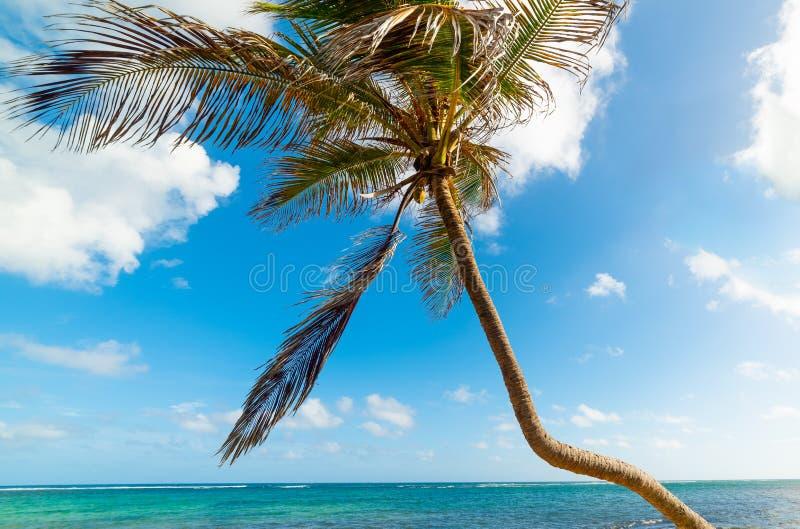 Palmboom over zee op het strand van Autre Bord in Guadeloupe royalty-vrije stock foto's