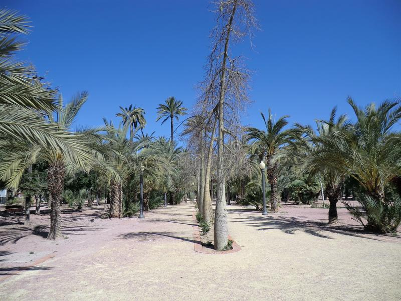 Palmbos in Elche, Spanje royalty-vrije stock foto's