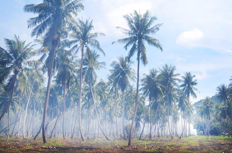 Palmbos op tropisch eiland in Thailand royalty-vrije stock foto