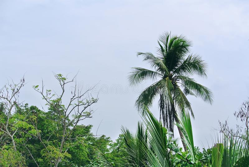 Palmbovenkant tegen Blauwe Bewolkte Hemel royalty-vrije stock afbeeldingen
