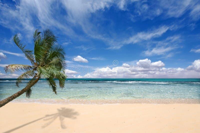 Palme über den Ozean-Wellen lizenzfreie stockfotografie