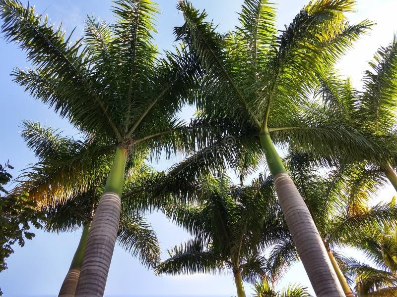 palme fotografie stock