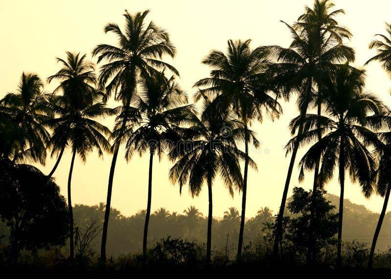 Palme fotografia stock libera da diritti