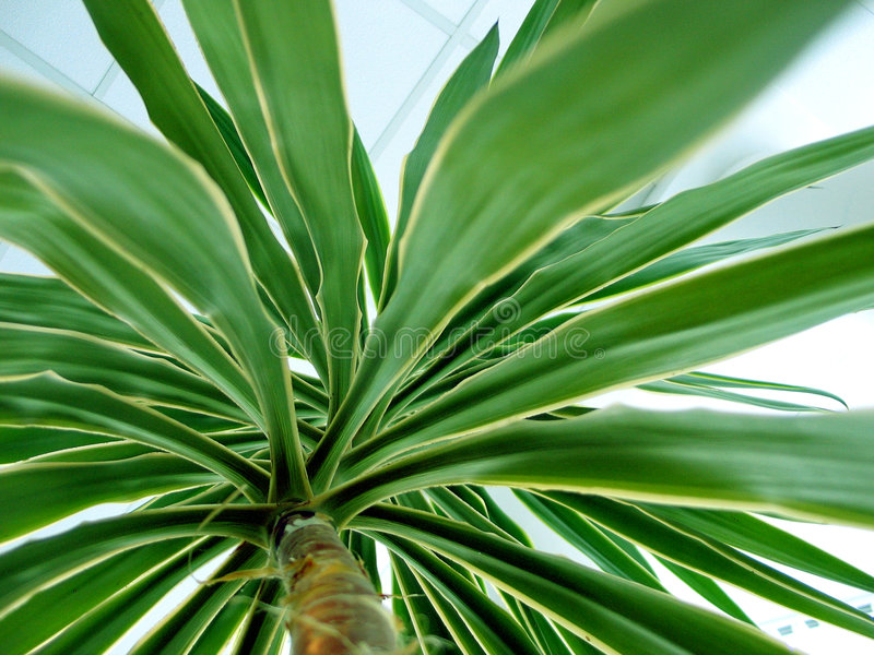 Palme. Stockbild