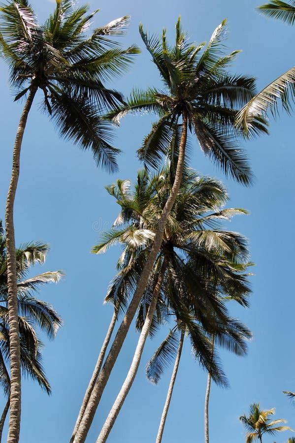 Palme immagine stock libera da diritti