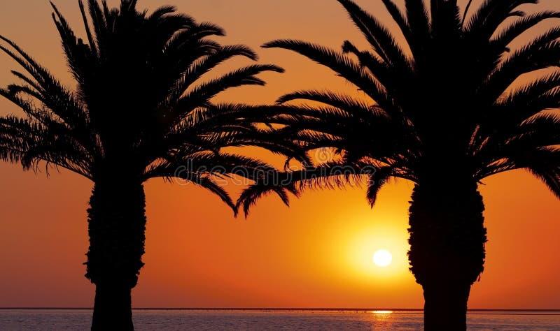 Palme ad una spiaggia sui precedenti di bello tramonto rosso e di un sole luminoso fotografie stock libere da diritti