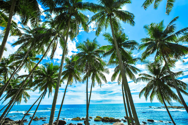 Palme ad una spiaggia tropicale immagine stock libera da diritti