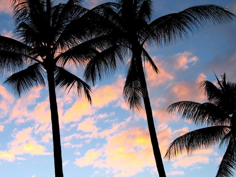 Palme al tramonto immagini stock libere da diritti