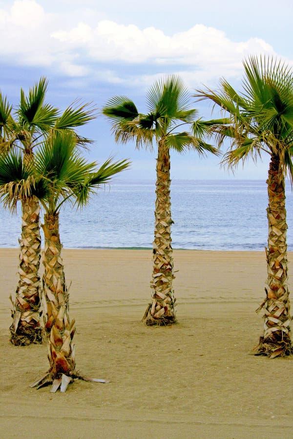Palme alla spiaggia fotografia stock libera da diritti