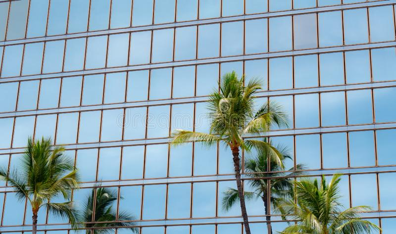Palme alte contro le finestre di vetro di un edificio per uffici fotografia stock