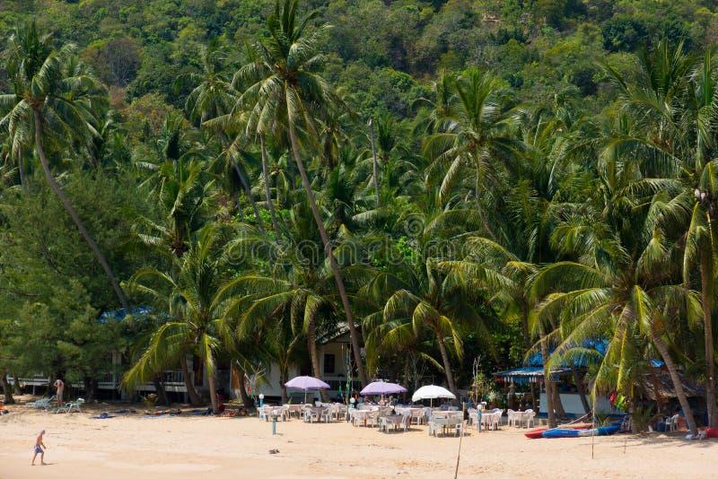Palme alte sulla spiaggia in Koh Samui fotografia stock