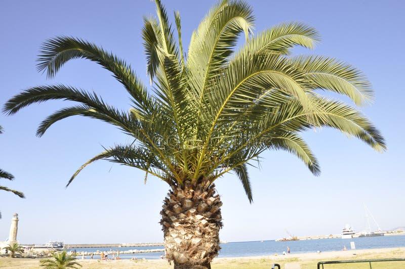 Palme auf dem Himmel von der Rethymno-Stadt von Kreta in Griechenland stockbilder