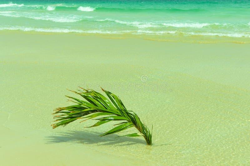 Palme auf dem Strand lizenzfreie stockfotografie