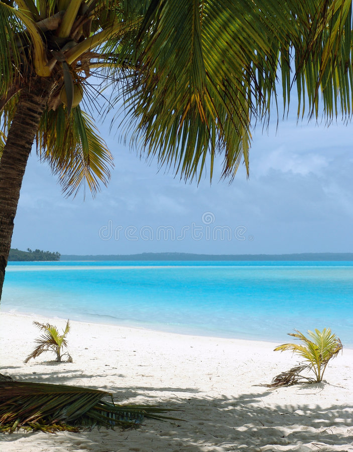 Palme auf Strand stockfotografie