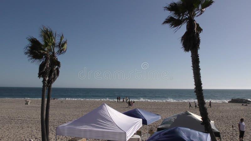 Palme auf windigem Strand stock video footage