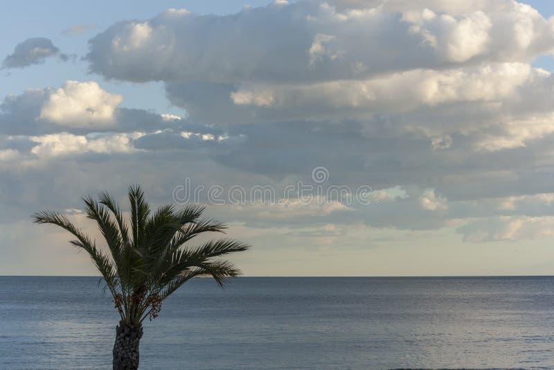 Palme bei Sonnenuntergang mit einem drastischen Himmel lizenzfreies stockfoto