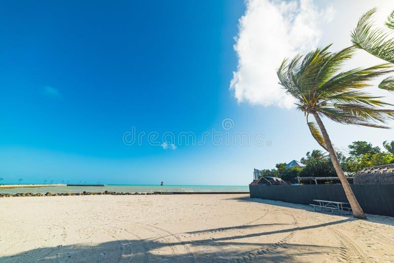 Palme bianche e della sabbia in spiaggia di Higgs in Key West fotografia stock