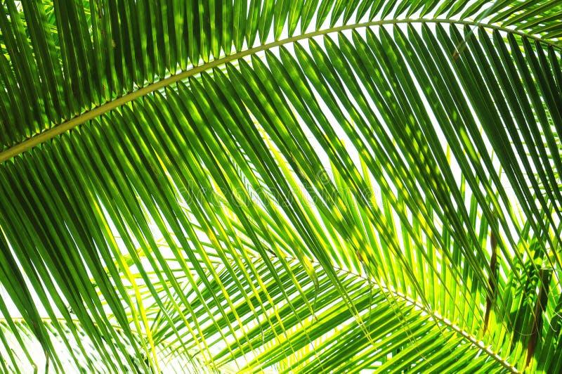 Palme-Blätter stockbilder
