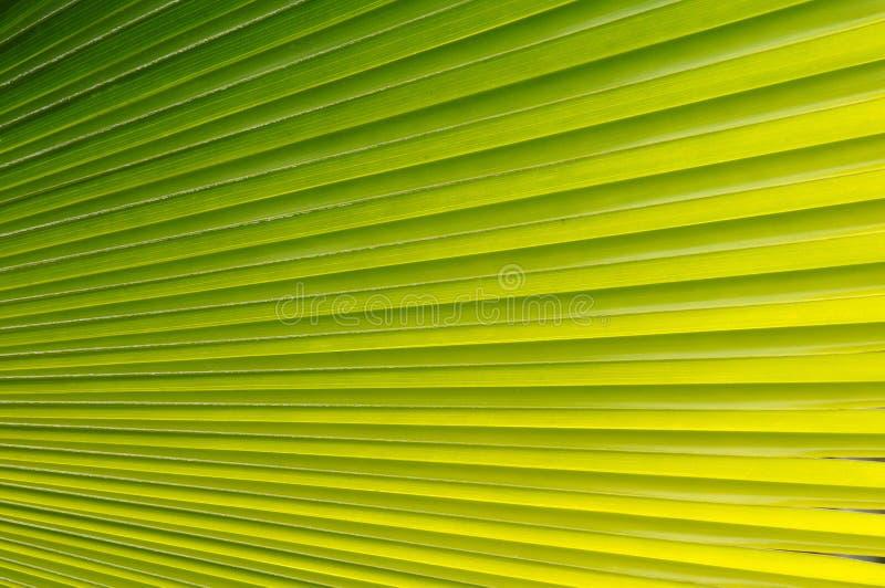 Palme-Blatt lizenzfreies stockbild