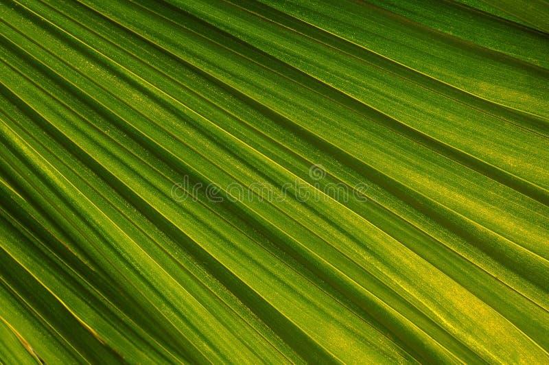 Palme-Blatt stockfotos