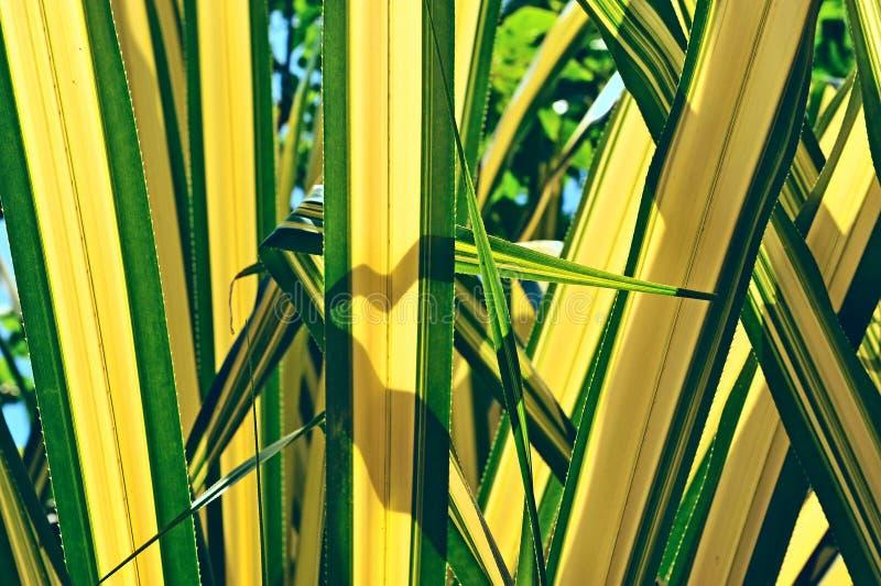 Palme-Blatt stockbilder