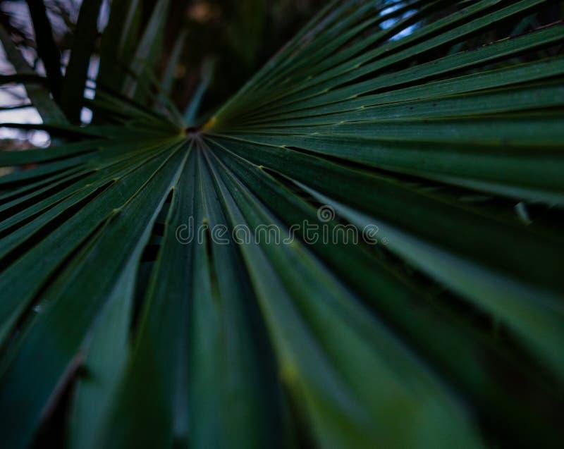 Palme-Blattmakro stockbild