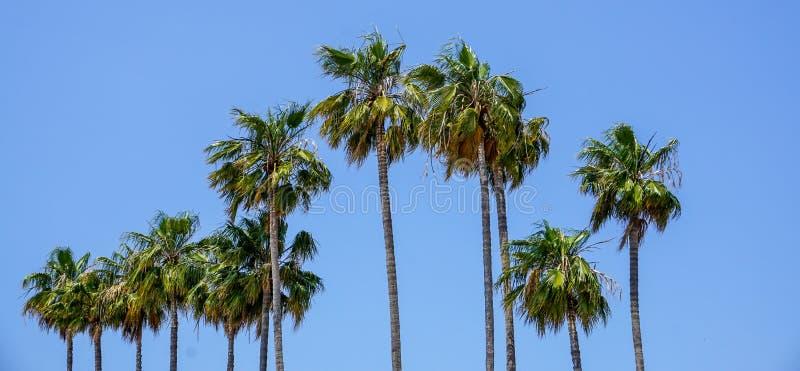 Palme a Cannes sul Cote d'Azur fotografia stock