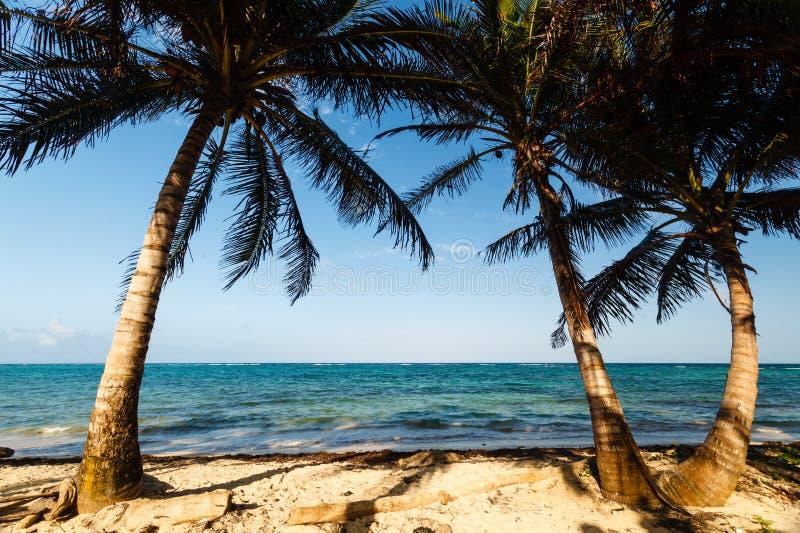 Palme che incorniciano una vista di oceano e della spiaggia immagine stock