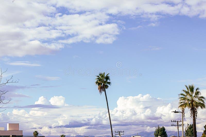 Palme con le cime della casa, alberi e cavi elettrici sminuiti da grande cielo blu con le nuvole lanuginose gigantesche fotografia stock libera da diritti