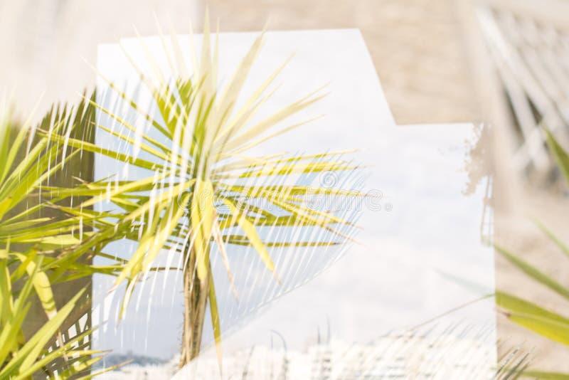 Palme contro cielo blu, palme alla costa tropicale, annata tonificata e stilizzata, cocco, albero di estate, retro fotografia stock