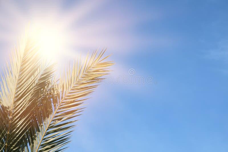 Palme contro i raggi del sole e del cielo blu viaggio, estate, vacanza e concetto tropicale della spiaggia fotografia stock libera da diritti