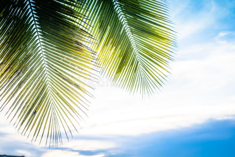 Palme contro i raggi del sole e del cielo blu viaggio, estate, vacanza e concetto tropicale della spiaggia fotografia stock