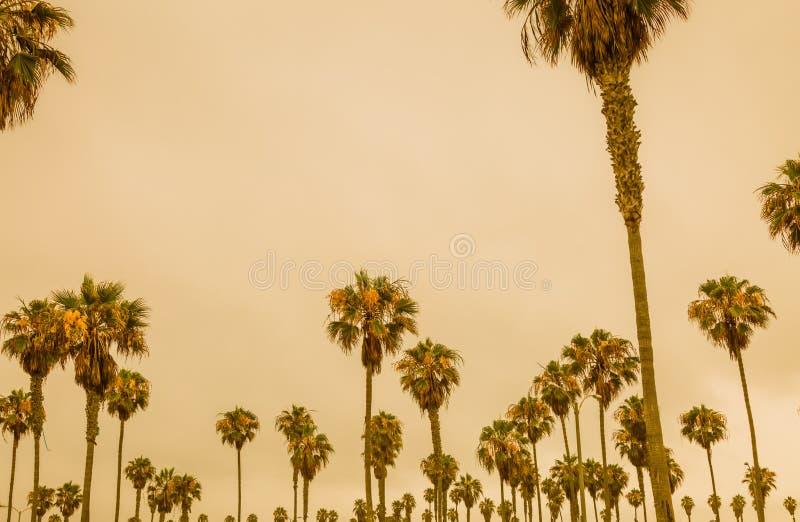 Palme contro un cielo arancio del mare fotografia stock