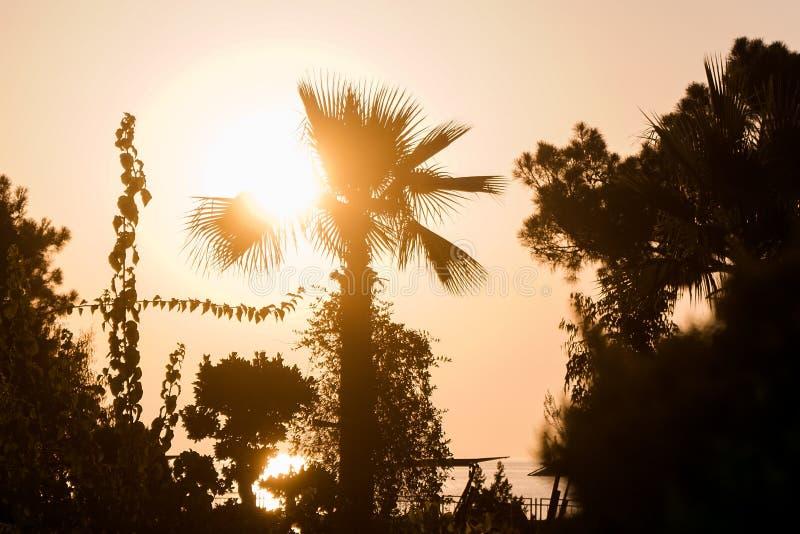 Palme dal mare nell'ambito del tramonto immagini stock