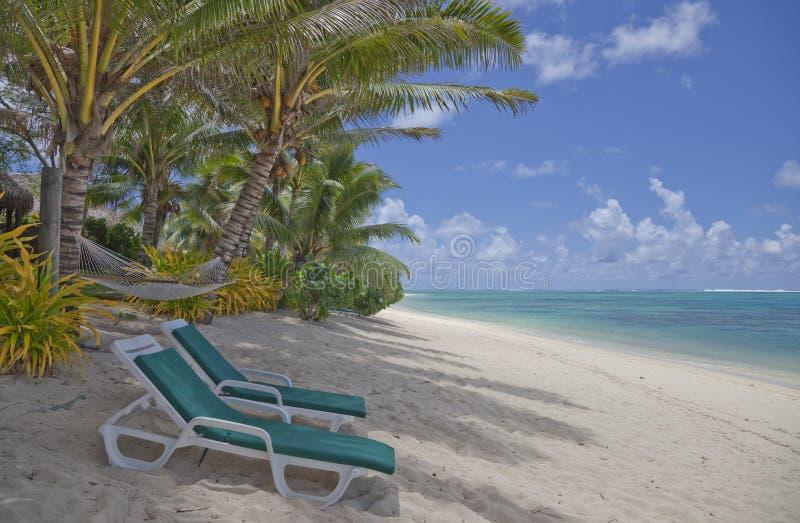 Palme del salotto delle presidenze di spiaggia tropicali