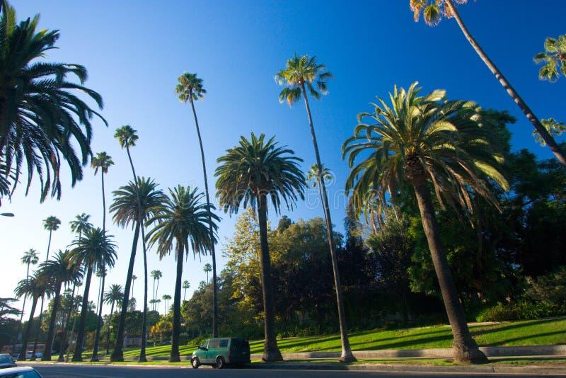 Palme della California immagine stock