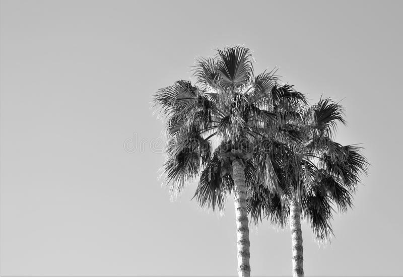 Palme della montagna del deserto fotografia stock