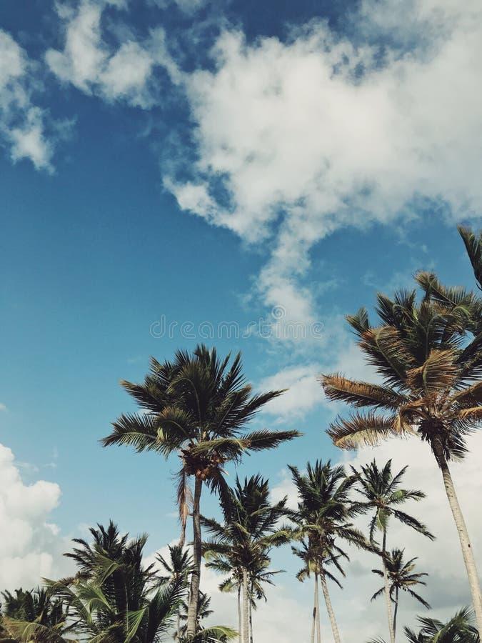 Palme della spiaggia di Juanillo sotto il cielo pesante immagine stock libera da diritti