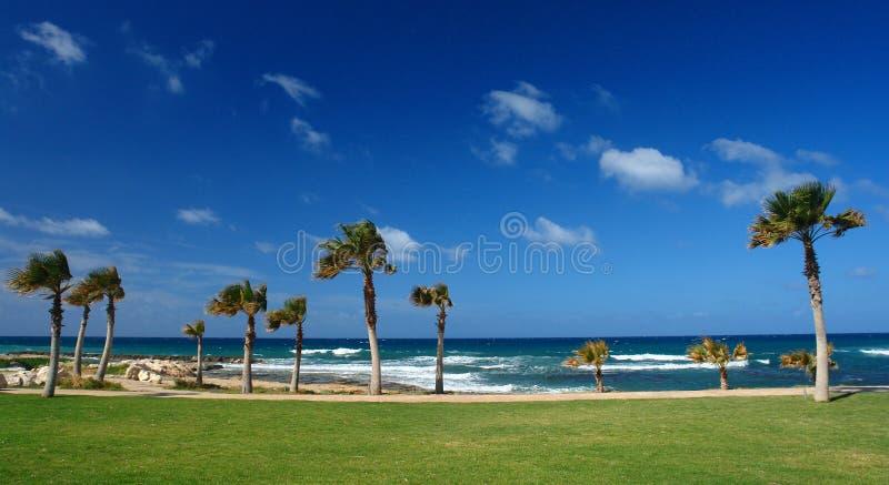 Palme in der Paphos Küste stockfoto
