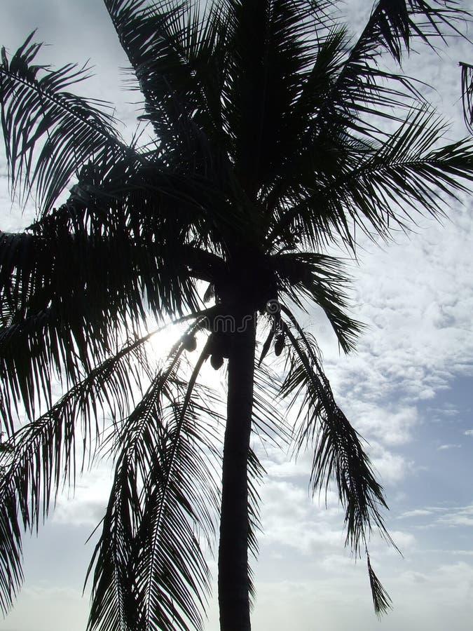 Palme in der Sonne lizenzfreie stockbilder