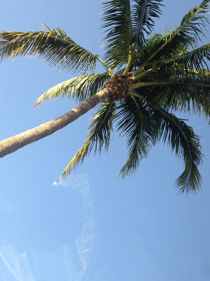 Palme in der Sonne stockbilder