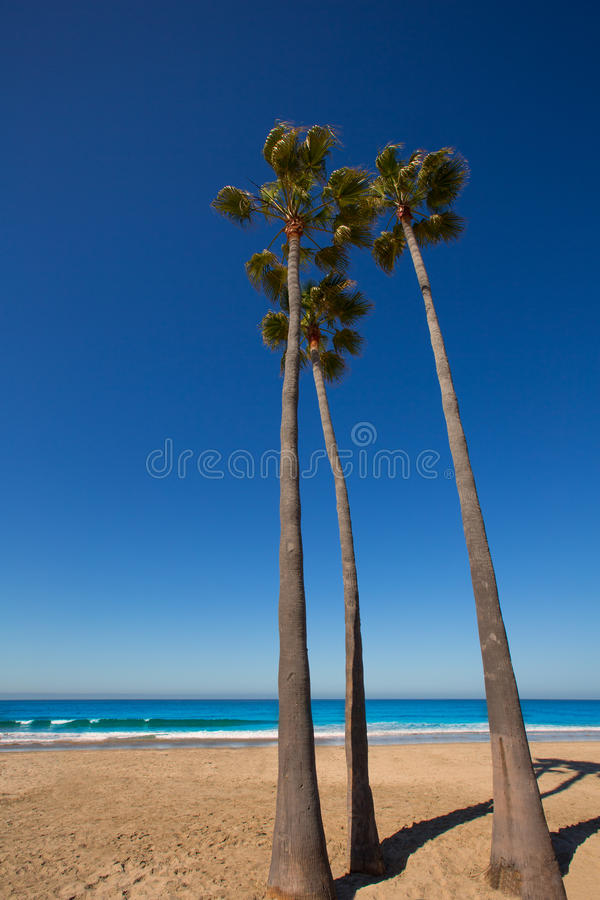 Palme di California della spiaggia di Newport sulla riva immagini stock libere da diritti