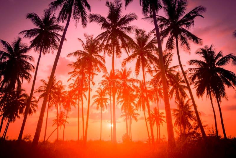 Palme di cocco di silhouette sulla spiaggia al tramonto Toni di vintage fotografia stock libera da diritti