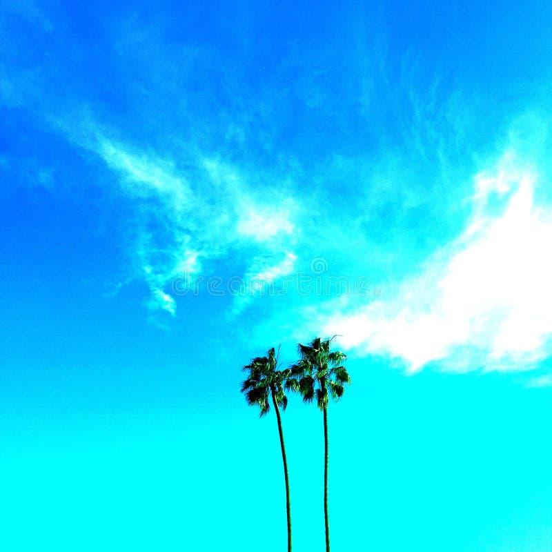 Palme di Malibu immagini stock
