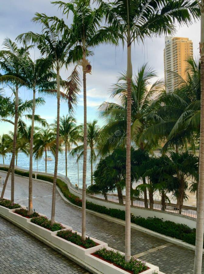 Palme di Miami fotografia stock libera da diritti