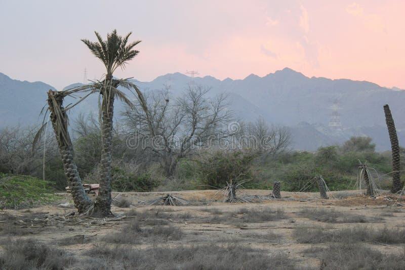 Palme di morte nel deserto immagini stock libere da diritti