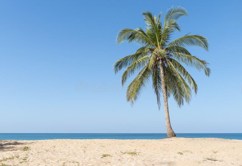 Download Palme di noce di cocco fotografia stock. Immagine di nave - 55357674
